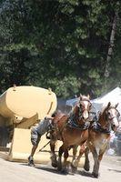 Hur man tränar en Farm häst till arbete