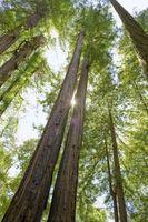 Avancerade Tree avverkning tekniker