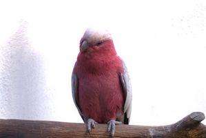 Exotisk fågel sjukdomar