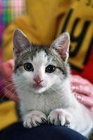 Hem botemedel mot en UVI i manliga katter