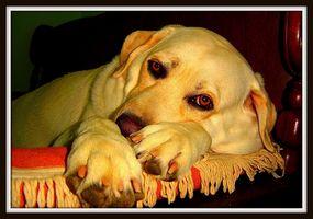 Kosttillskott för öroninfektioner hos hundar