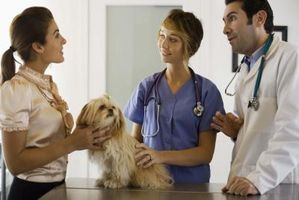 Frågor för en första veterinären utnämningen