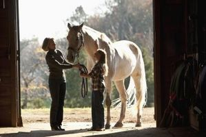 Hur man handskas med Proud Flesh i hästar