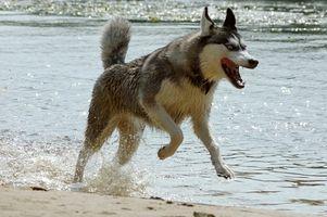 Medicinska orsaker till hund Aggression