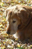 Biverkningar av hund cefalexin & buksmärtor