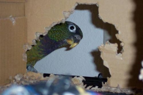 Hur till omsorg for en papegoja