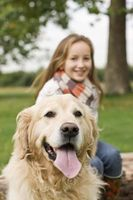 Kan mikrochips i hundar tas bort?