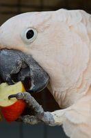 Hur att plocka torr hud från en kakadua