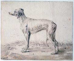 Hur man drar en Greyhound hundar