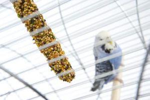 Hur man sterilisera sittpinnar för fåglarna