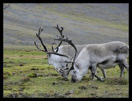 Definitionen av Tundra