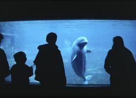Hur naturligt höja alkaliskt pH-nivåer i ett akvarium