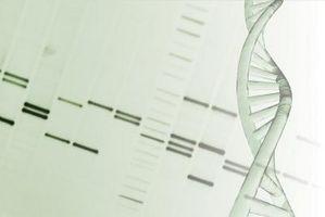Varför är sekvensen av kvävebaser viktigt?
