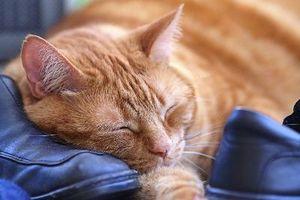 förkyld katt behandling