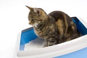 Hur bli av en katt urin lukt från undergolv