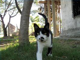 Hemgjord loppa behandlingar för katter