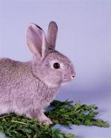 Vilka frukter & grönsaker är bra för kaniner?