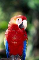 Hur kan jag träna min Rainbow fåglar?