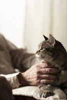 Varför katter gå skallig i ålderdomen