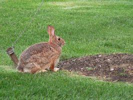 Växtnäring för kaniner