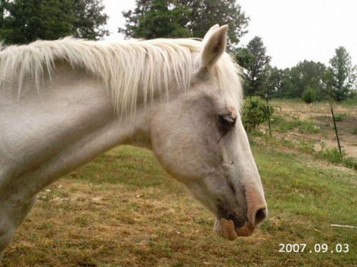 Vilka är behandlingarna för häst Mange?