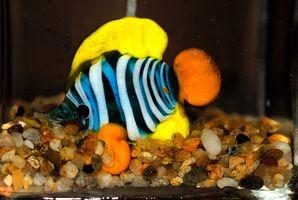 Hur man bygger saltvatten fisk tank