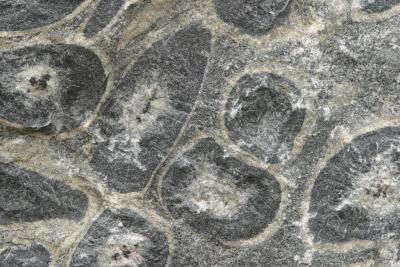 Dating fossil miljoner år gammalCraigslist Appleton dating