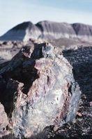 Vad är en förstenad Fossil?