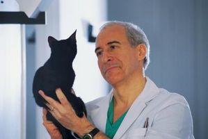 Vilka är de vanligaste katt vaccinationer att få?