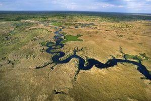 Florida Everglade ekosystem