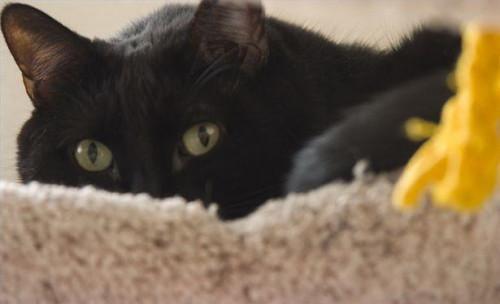 Hur till stopp en katt från repor mattan och Meowing tidigt på morgonen utanför sovrumsdörren