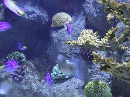 Hur man får klart akvarium saltvatten