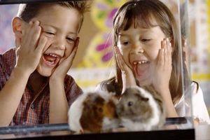 Hur till omsorg for ryska hamstrar