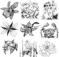 Hur man tecknar sorters blommor
