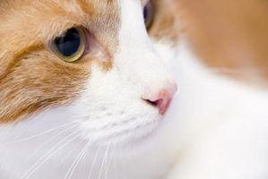 råttgift katt symtom