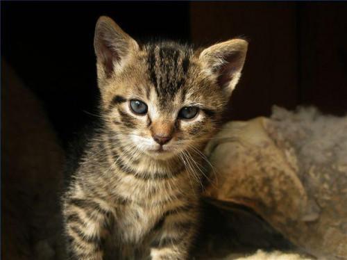 Binnikemask läkemedel för katter