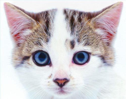 Homeopatiska medel för en sjuk katt