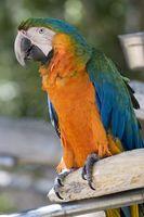 Hur man bygger en Heavy Duty papegoja bur