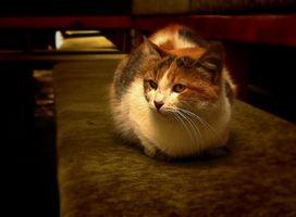 Hur till stopp din katt från urinera på möbler