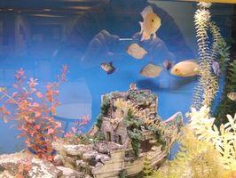Orsakerna till grumligt vatten i en tropisk fisk Tank
