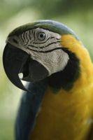 Hur får fåglar bort överskottsvärme?