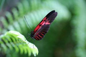 Hur man hjälper en fjäril ur kokong