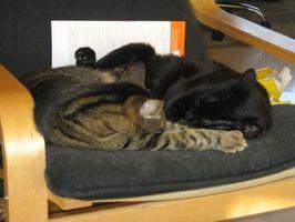 Hur man kan föra en utomhus katt in i en Indoor katt hushåll