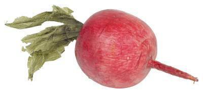 Hur man gör färgade markörer från vegetabiliska färgämnen
