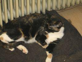 Itrakonazol biverkningar hos katter