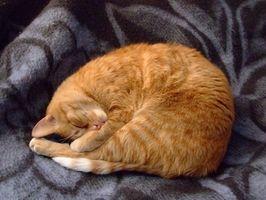 Biverkningar av Buprenex hos katter