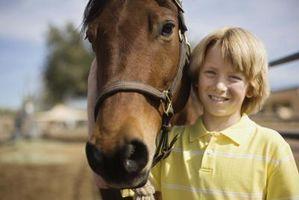 Tecken & symtom på hjärtsjukdom hos äldre hästar