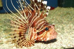 DIY Protein Vattenplockare för hem akvarier