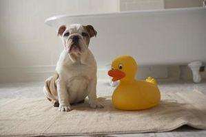 Hur att bada hundar med bakpulver