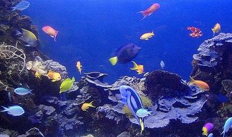 Om tropiska fiskar sjukdom
